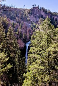 View of Yellowstone Tower Falls through the trees.